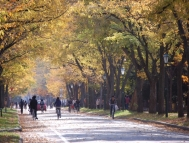 Central Avenue in autumn